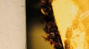 Biancamaria Monticelli, una foto speciale