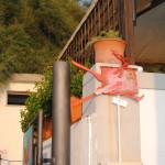 Corti di Sabbia il Melograno 2015 Livorno (4)