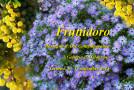 Fruttidoro – Rassegna d'arte contemporanea alla galleria Il Melograno – Livorno – 05/09 – 17/09