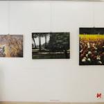 Rosanna Costa mostra Livorno Il Melograno (61)