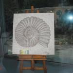 archeoclub-livorno-mostra-pittura-2016-149